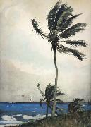 Winslow Homer Palm Tree,Nassau (mk44) oil painting picture wholesale